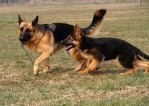 3-Ghildo-cucciolo.jpg